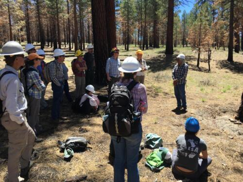 Field trip to Indiana Summit old growth stand with Bishop Paiute tribe