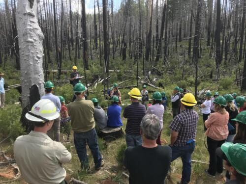 Rim Fire Field Trip 2019